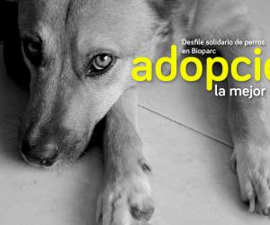 adoptar perros en Valencia